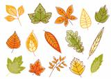 Autumnal colorful isolated leaves