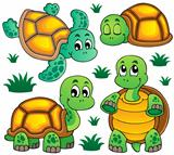 Image with turtle theme 1
