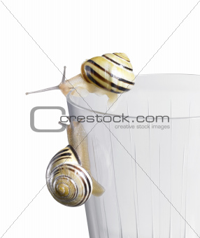 Grove snails on a drinking glass