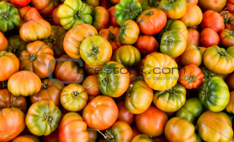 Very fresh tomatoes in many colors