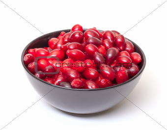 Dogberry in Bowl