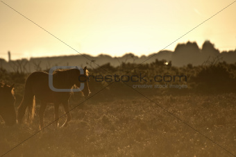 Beautiful image of New Forest pony horse backlit by rising sun i