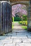 Beautiful fresh Spring blossom viewed through old wooden door