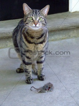 Cat catch mouse
