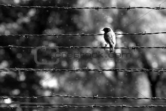 Auschwitz - bird
