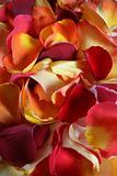 Rose petal background
