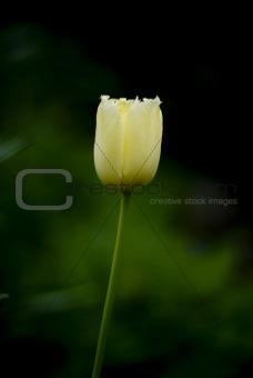 Slender flower