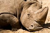 Muddy Rhino