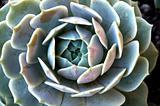 Succulent Plants Growing