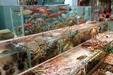 Seafood in tank