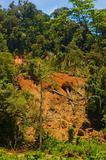 Forest Destruction