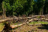 Forest Destruction