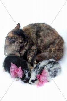 cat mother and small rabbits