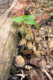 Undercover Mushrooms