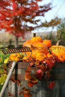 Rake and pumpkins