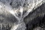 X Marks the Spot--Snowy Trees Snoqualme Washington