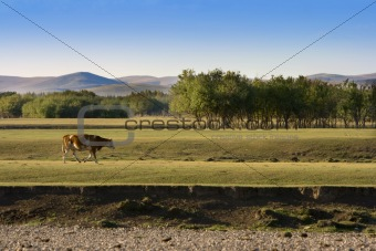 Autumn Grassland View