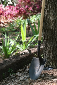 Shovel In Garden