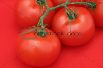 Tomato Red Explosion