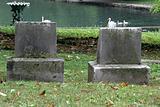 Tombstones & Swans
