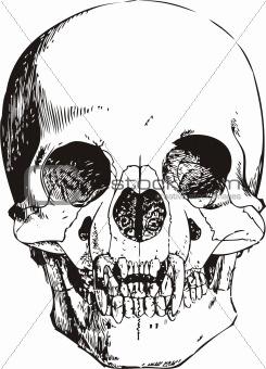 Vampire skull vector illustration