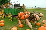 Pumpkin Horses