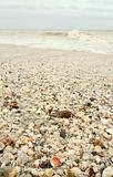 Seashell Covered Beach