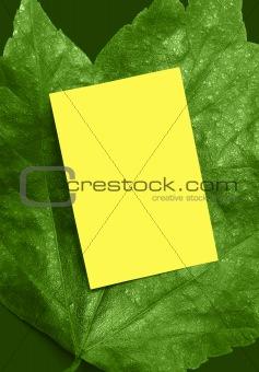 Bright green leaf ad frame