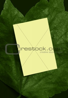 Green leaf ad frame