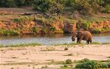 Elephant bull standing next to river
