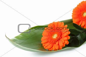 fresh bouquet from orange gerbers
