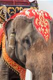 thai elephant