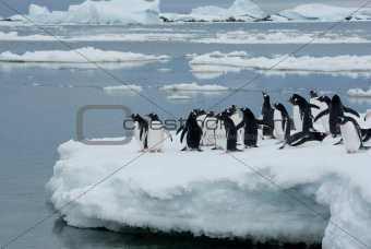 Penguins on the ice.