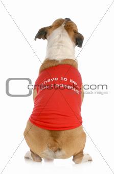 animal rescue or adoption