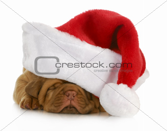santa puppy