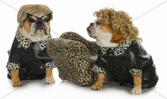 diva dogs