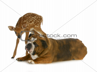dog and deer