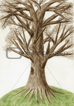 Artistic color pencil drawing &quot;The Tree&quot; 