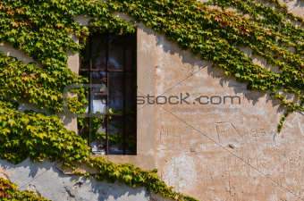 Window with metal bars and grape leaves