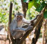 Artful monkey sitting on the tree