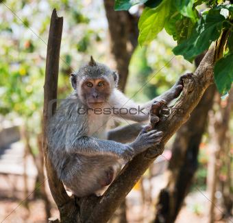 Artful monkey sitting on the tree
