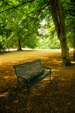 Empty bench in a park
