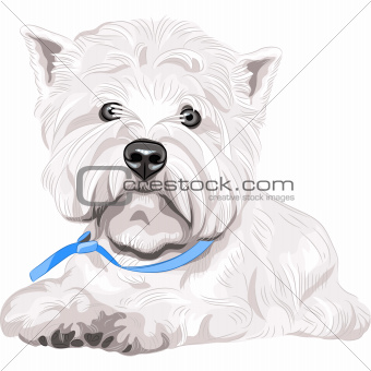 vector serious dog West Highland White Terrier breed sitting