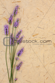 Lavender Flower Beauty