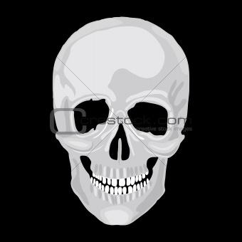 Human skull model.