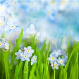 Fantasy Gentle Floral Background / Blue Flowers Defocused