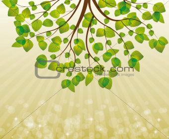branches with leaves