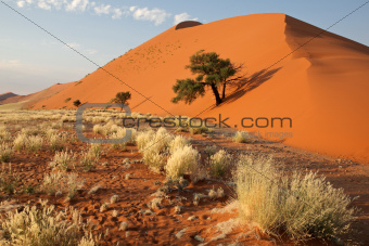 Grass, dune and tree