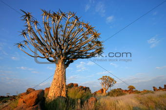 Quiver tree landscape