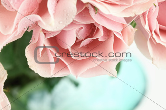 Pink Tea Roses